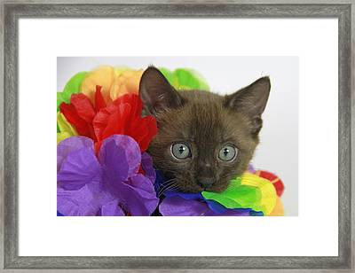 Bengal Colors Framed Print