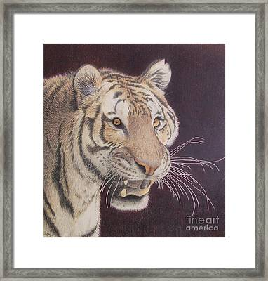 Bengal Framed Print by Jena Suits