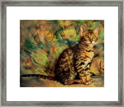 Bengal Kitten Framed Print