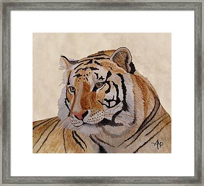 Bengal Tiger Framed Print by Angeles M Pomata