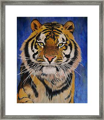 Bengal Tiger Framed Print by Don MacCarthy