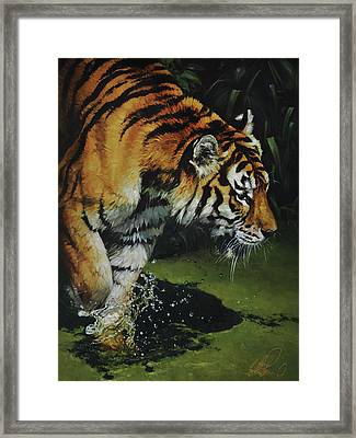 Bengal Tiger Framed Print by Heather Theurer