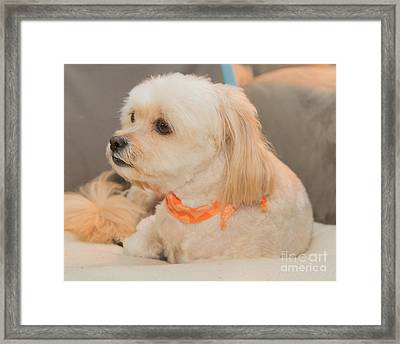 Benji On The Look Out Framed Print