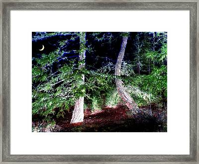 Bent Fir Tree Framed Print