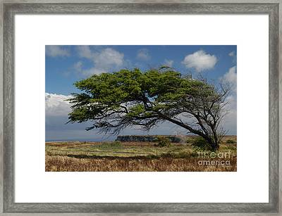 Bent Tree Framed Print