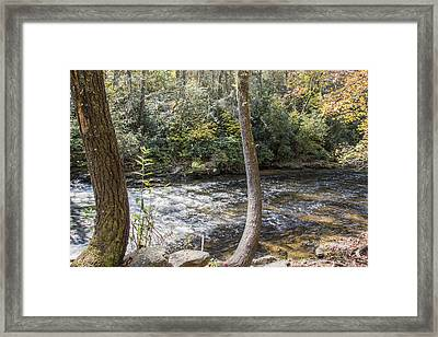 Bent Tree River Framed Print by Ricky Dean