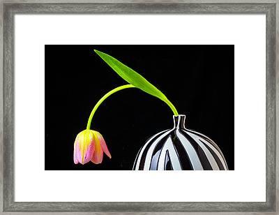 Bent Tulip In Vase Framed Print