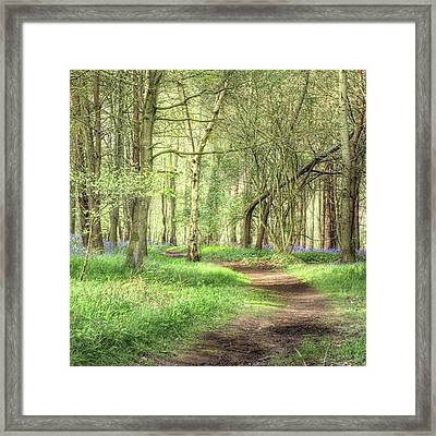 Bentley Woods, Warwickshire #landscape Framed Print