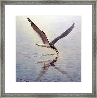 Black Skimmer Framed Print