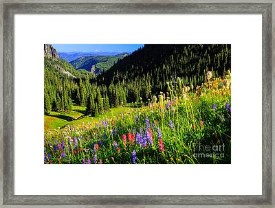 Berkeley Park Framed Print