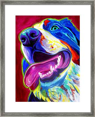 Bernese - Sunshine Framed Print by Alicia VanNoy Call