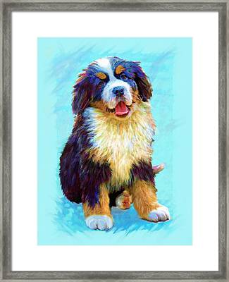 Bernese Mountain Dog Framed Print by Jane Schnetlage