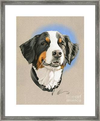Bernese Mountain Dog Framed Print by Marshall Robinson