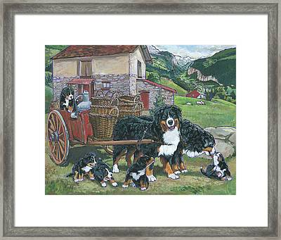 Bernese Mountain Dog Framed Print