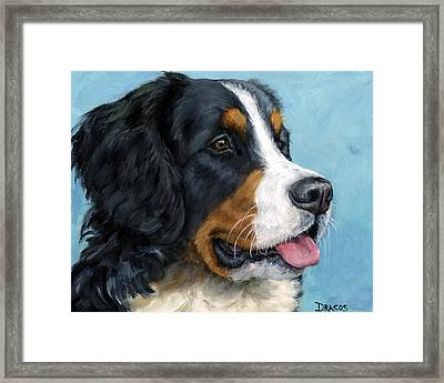 Bernese Mountain Dog On Blue Framed Print by Dottie Dracos