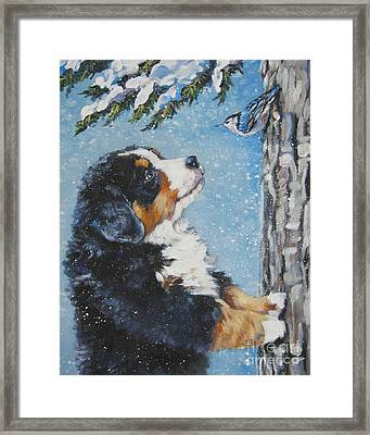 bernese Mountain Dog puppy and nuthatch Framed Print by Lee Ann Shepard