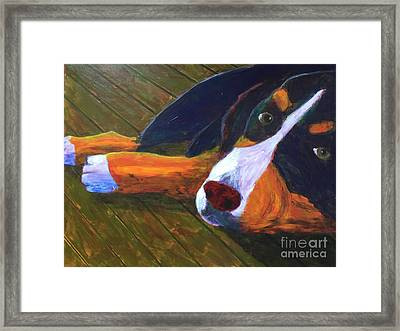 Bernese Mtn Dog On The Deck Framed Print