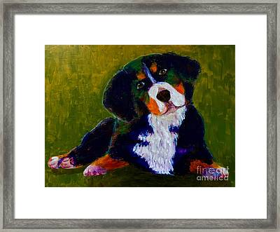 Bernese Mtn Dog Puppy Framed Print