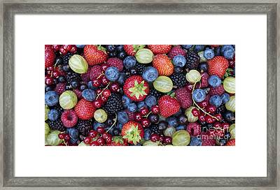 Berried  Framed Print by Tim Gainey