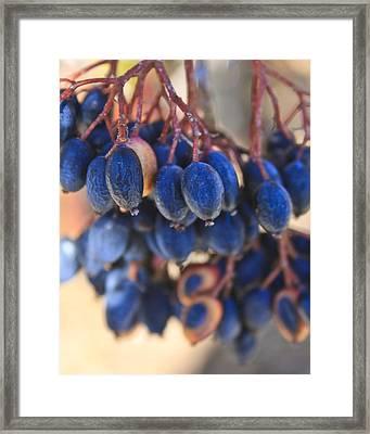 Berries Blue Too Framed Print