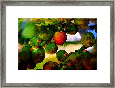 Framed Print featuring the photograph Berries by Harry Spitz