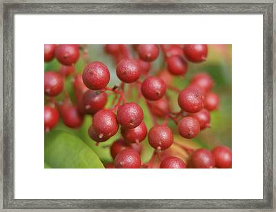 Framed Print featuring the photograph Berries by Heidi Poulin