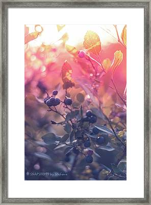 Berries In The Sun Framed Print by Stefanie Silva