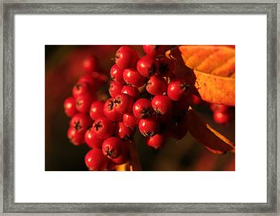 Berry Bountiful Framed Print