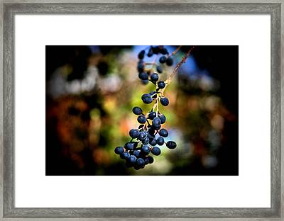 Berry Cold Out Framed Print by Karen Scovill