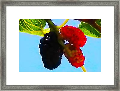 Berry Good Framed Print by Bill Cannon