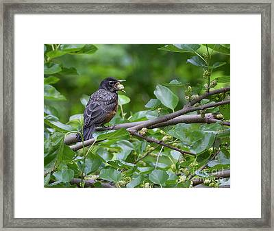 Framed Print featuring the photograph Berry Good by Chris Scroggins