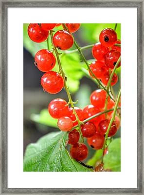 Framed Print featuring the photograph Berry Good by Isabella F Abbie Shores FRSA