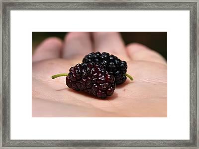 Berry Handy 2 Framed Print by Karen Scovill