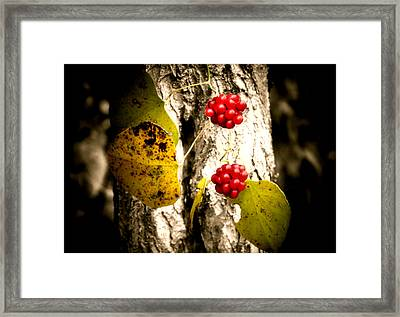 Berry Special Framed Print by Karen Scovill