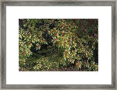 Framed Print featuring the photograph Berry Spread by Deborah  Crew-Johnson
