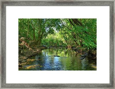 Berry Springs Framed Print
