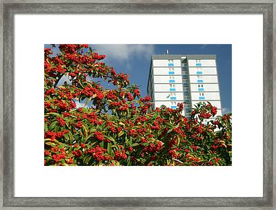 Berry The Future Framed Print by Jez C Self