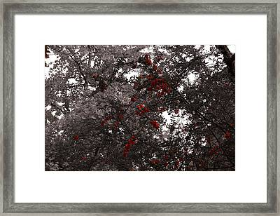 Berry Trees Framed Print by Bill Ades