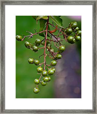 Berry Truly Yours  Framed Print by Michael Putnam