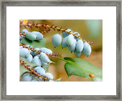 Berrylicious  Framed Print