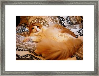Best Boy Framed Print by JAMART Photography