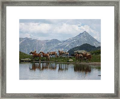 Best Creatures Framed Print