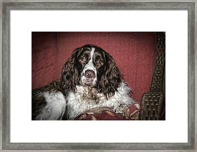 Best Friend Framed Print by Christina Durity