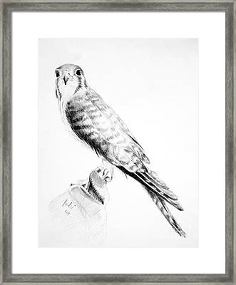 Framed Print featuring the drawing Best Friend by Eleonora Perlic