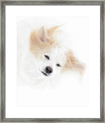 Best Friend Framed Print by Sue Stefanowicz