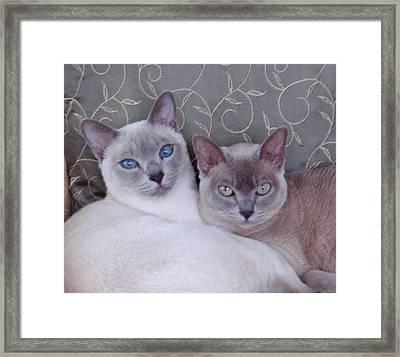 Best Friends Framed Print by Charlet Simmelink