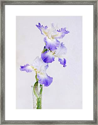 Best In Show Framed Print by Heather Applegate