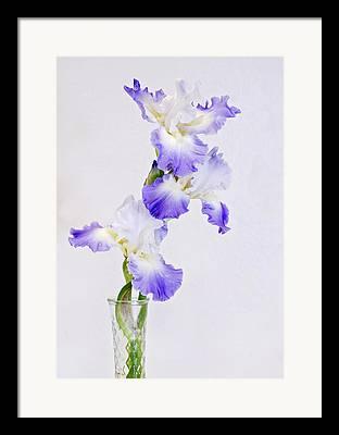 Reblooming Flowers Framed Prints