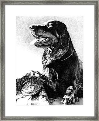 Best In Show Framed Print by Carole Raschella