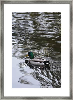 Best Of Both Worlds Framed Print by Richard Andrews